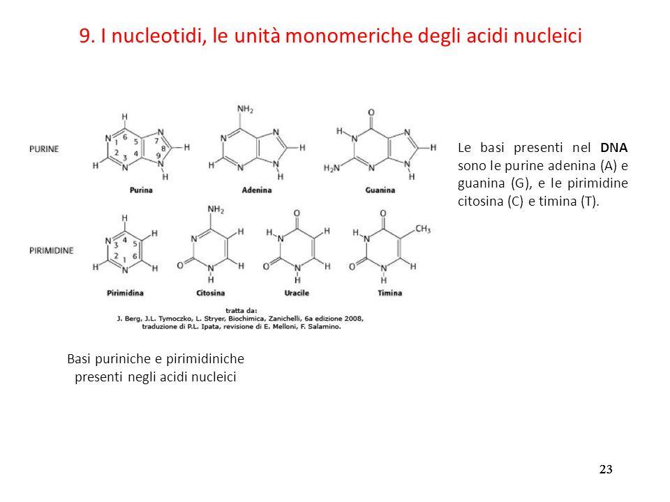 9. I nucleotidi, le unità monomeriche degli acidi nucleici