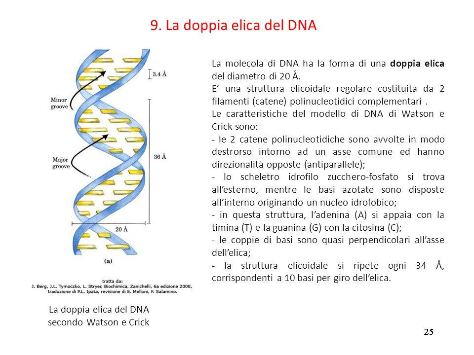 La doppia elica del DNA secondo Watson e Crick