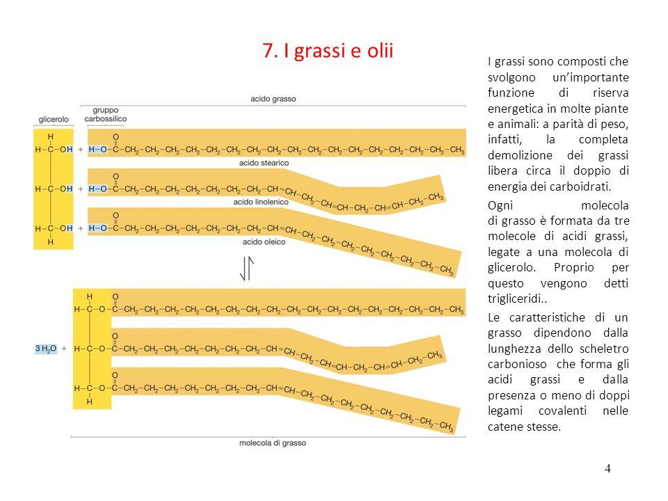 7. I grassi e olii