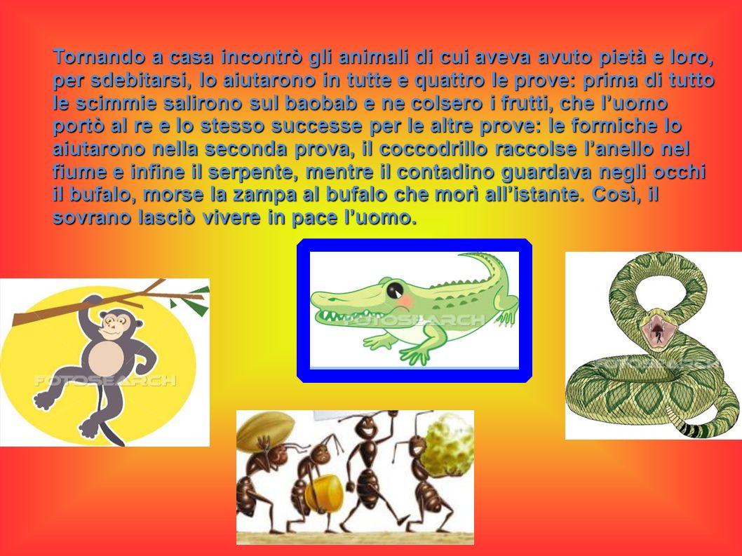 Tornando a casa incontrò gli animali di cui aveva avuto pietà e loro, per sdebitarsi, lo aiutarono in tutte e quattro le prove: prima di tutto le scimmie salirono sul baobab e ne colsero i frutti, che l'uomo portò al re e lo stesso successe per le altre prove: le formiche lo aiutarono nella seconda prova, il coccodrillo raccolse l'anello nel fiume e infine il serpente, mentre il contadino guardava negli occhi il bufalo, morse la zampa al bufalo che morì all'istante.