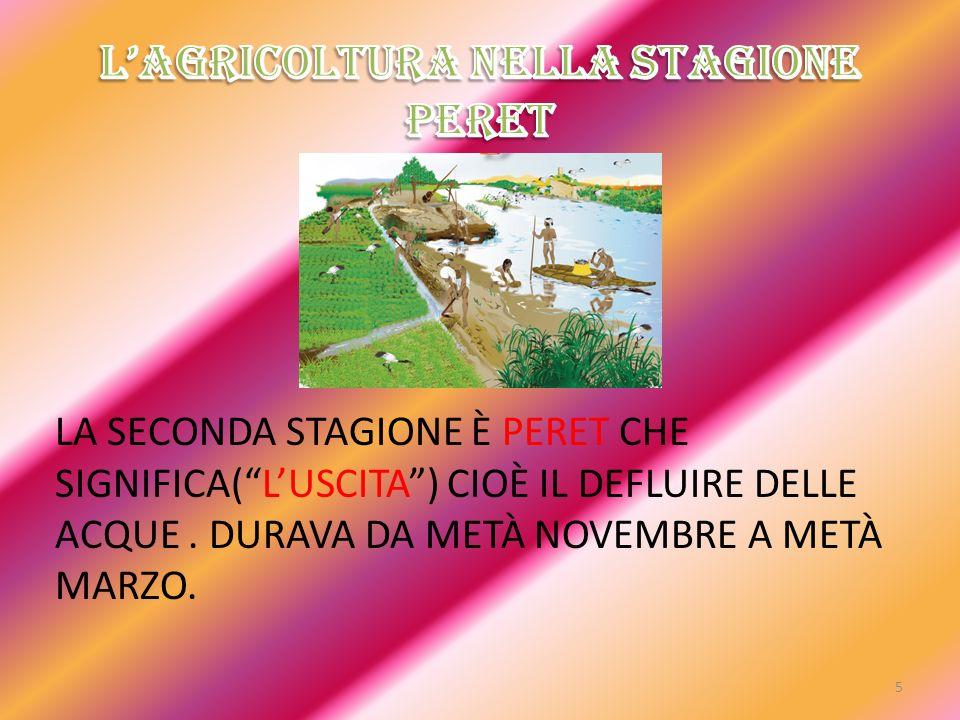 L'AGRICOLTURA NELLA STAGIONE