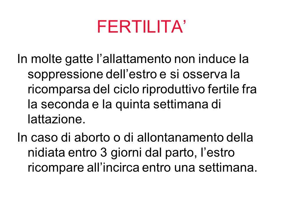 FERTILITA'