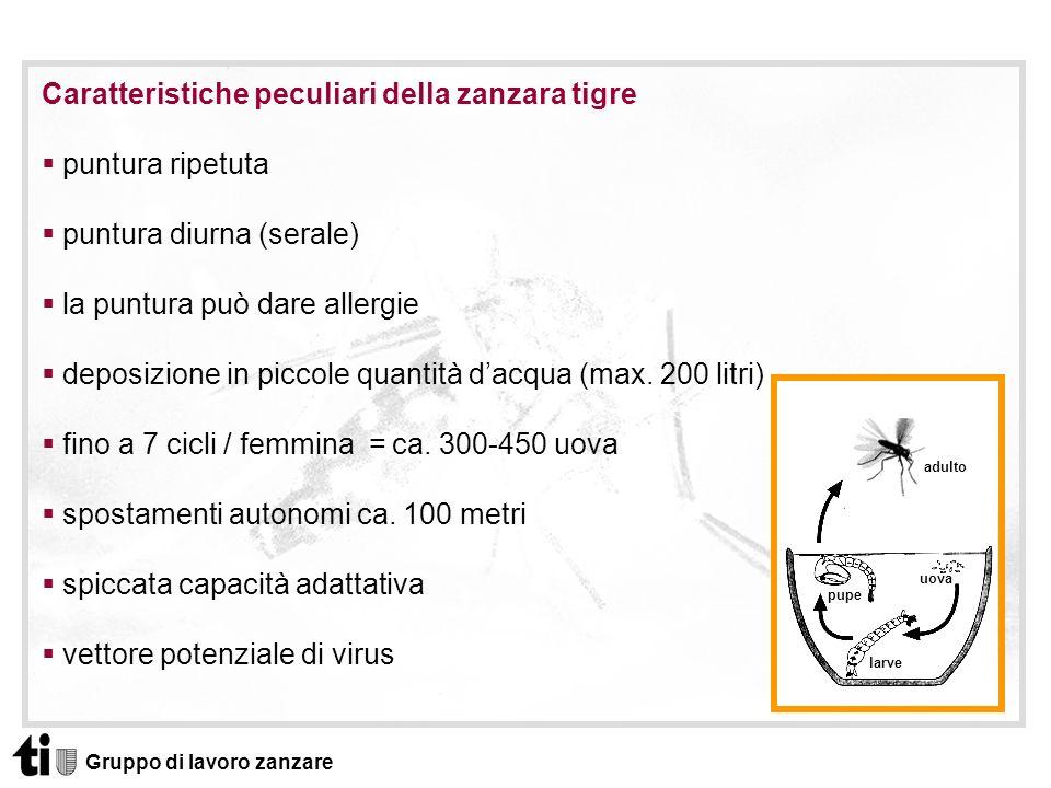 Caratteristiche peculiari della zanzara tigre puntura ripetuta