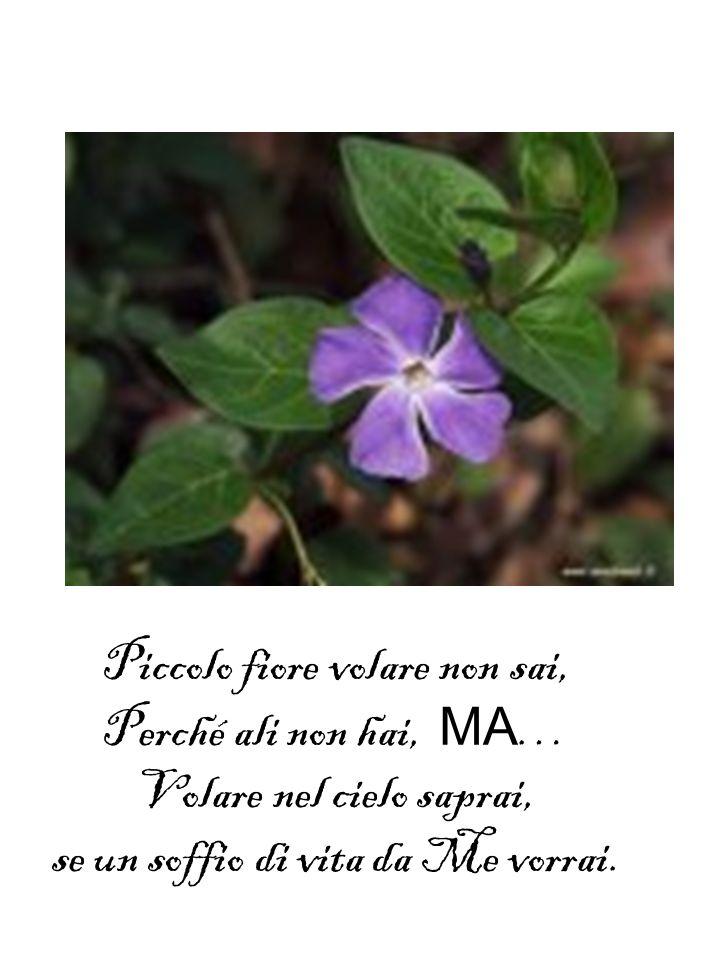 Piccolo fiore volare non sai, Perché ali non hai, MA…
