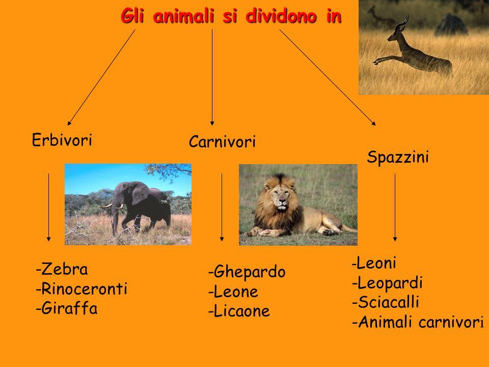 Gli animali si dividono in