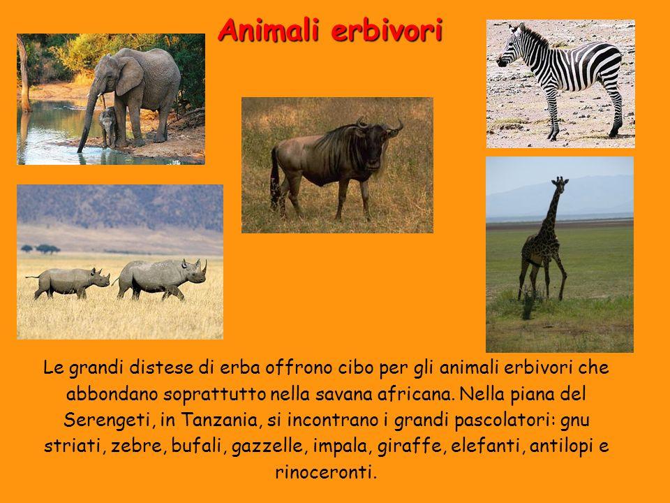 Animali erbivori