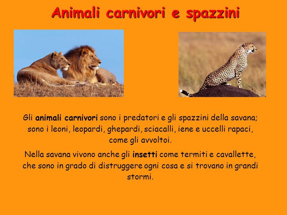 Animali carnivori e spazzini