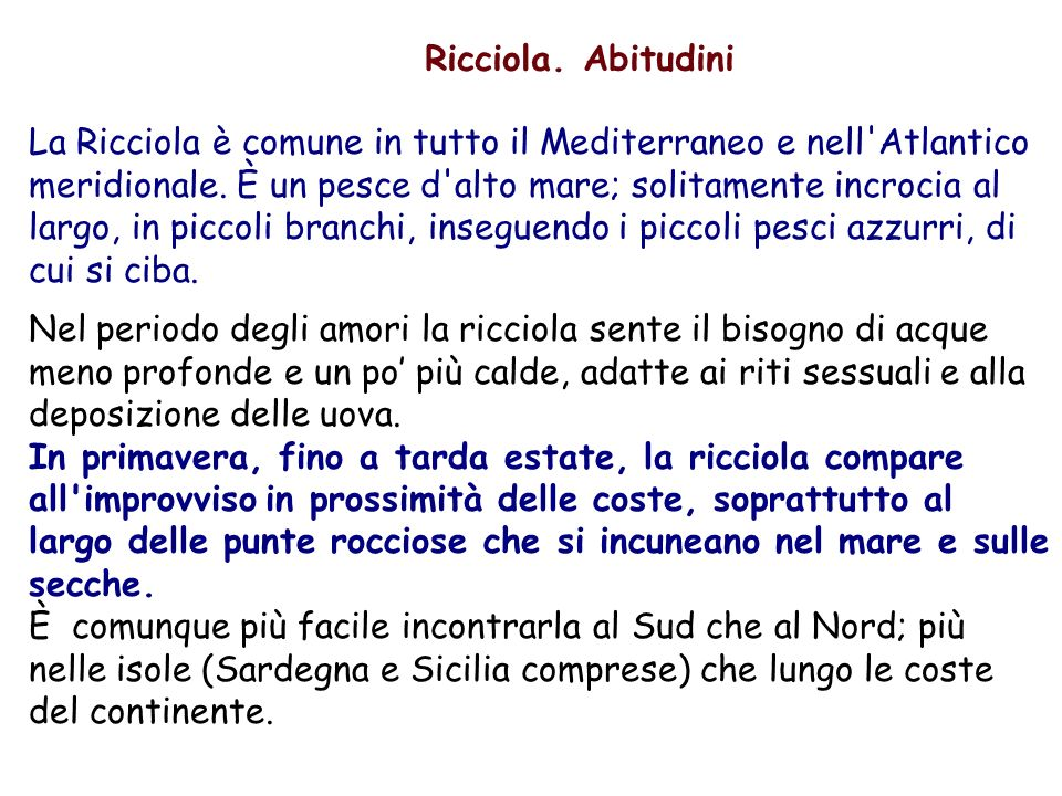 Ricciola. Abitudini