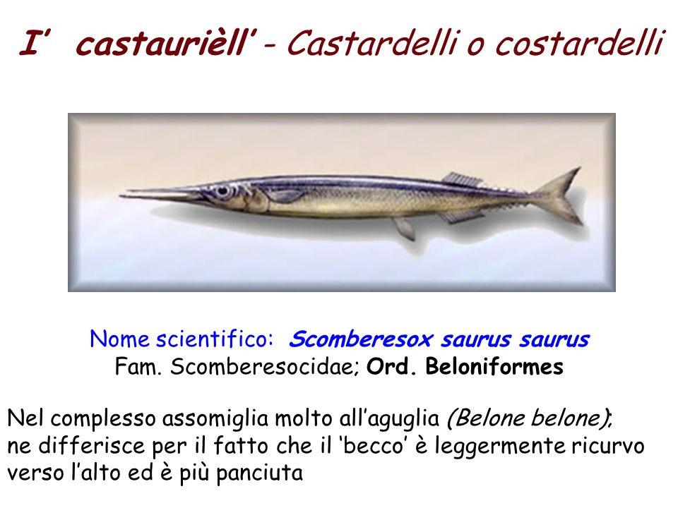 I' castaurièll' - Castardelli o costardelli