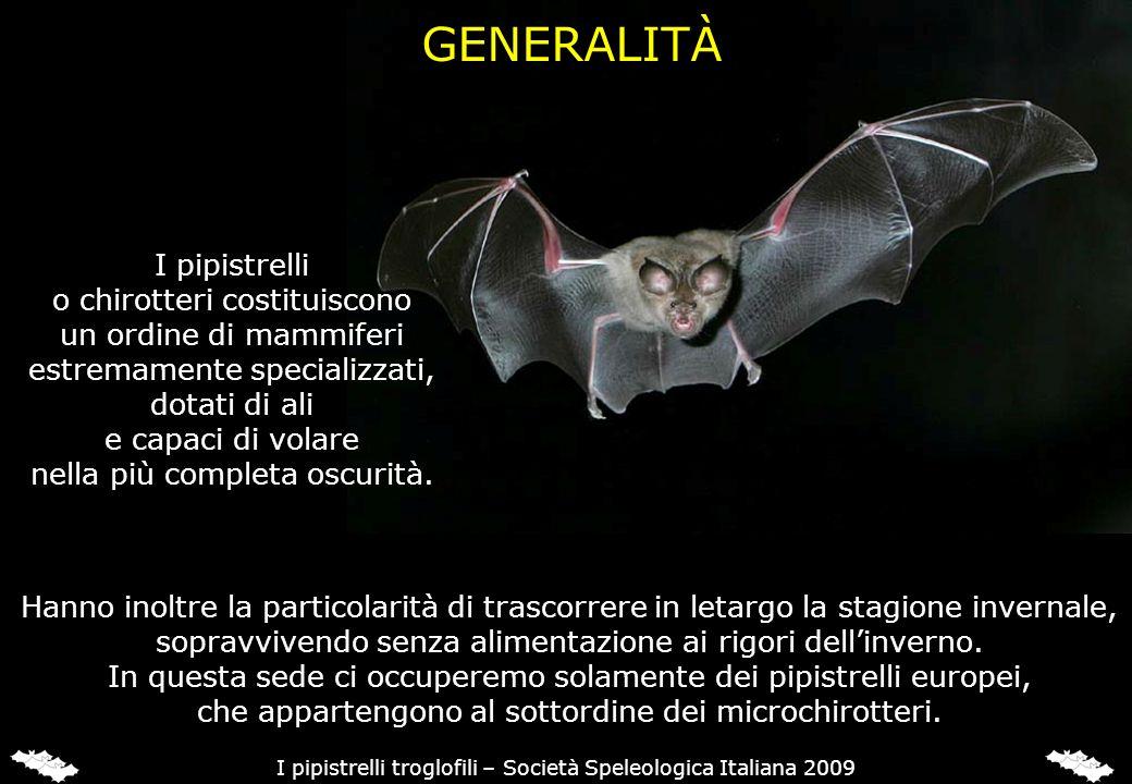 ECOLOCALIZZAZIONE I pipistrelli per orientarsi in volo e per catturare le prede.