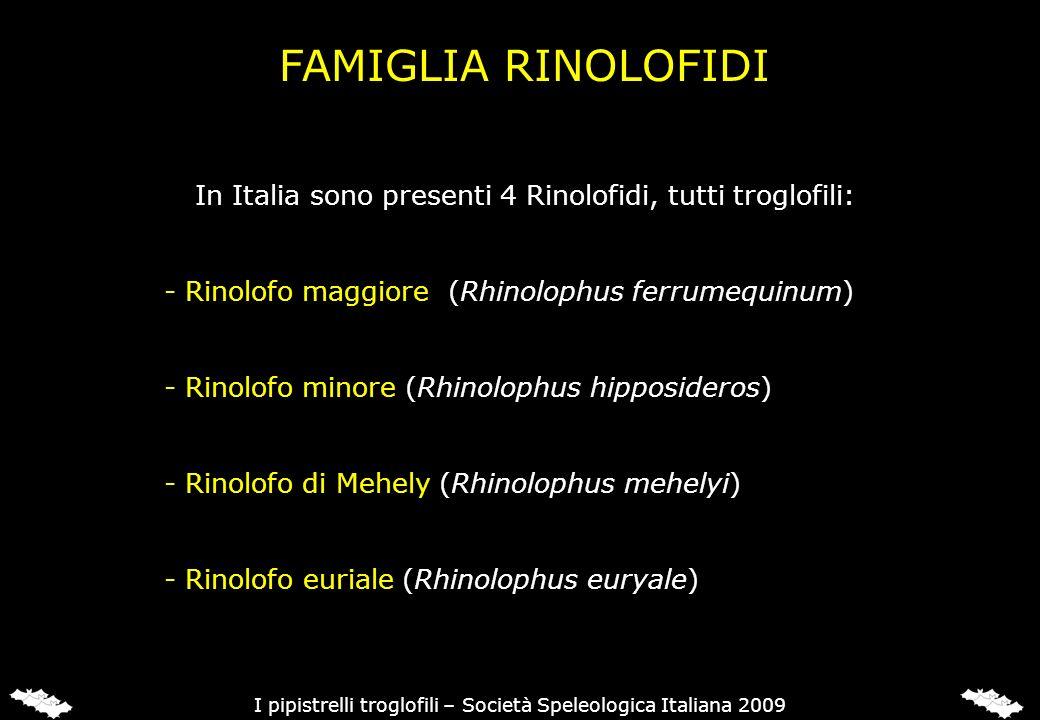 RINOLOFO MAGGIORE (Rhinolophus ferrumequinum)