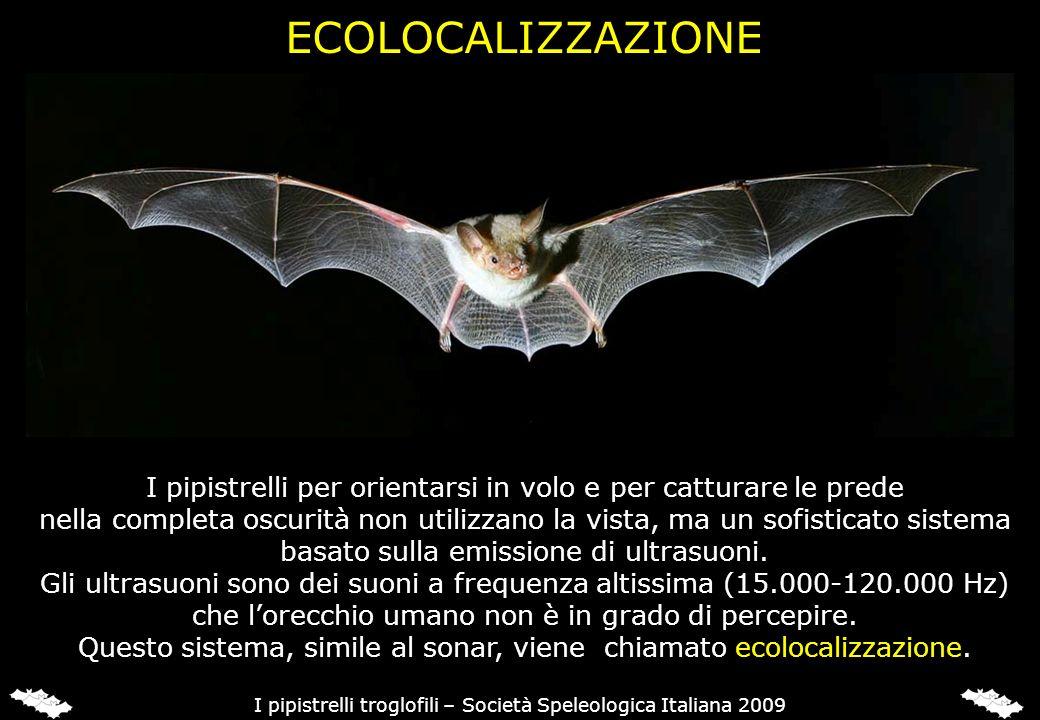 ECOLOCALIZZAZIONE I pipistrelli producono gli ultrasuoni con la laringe. e l'emissione avviene in due diversi modi.