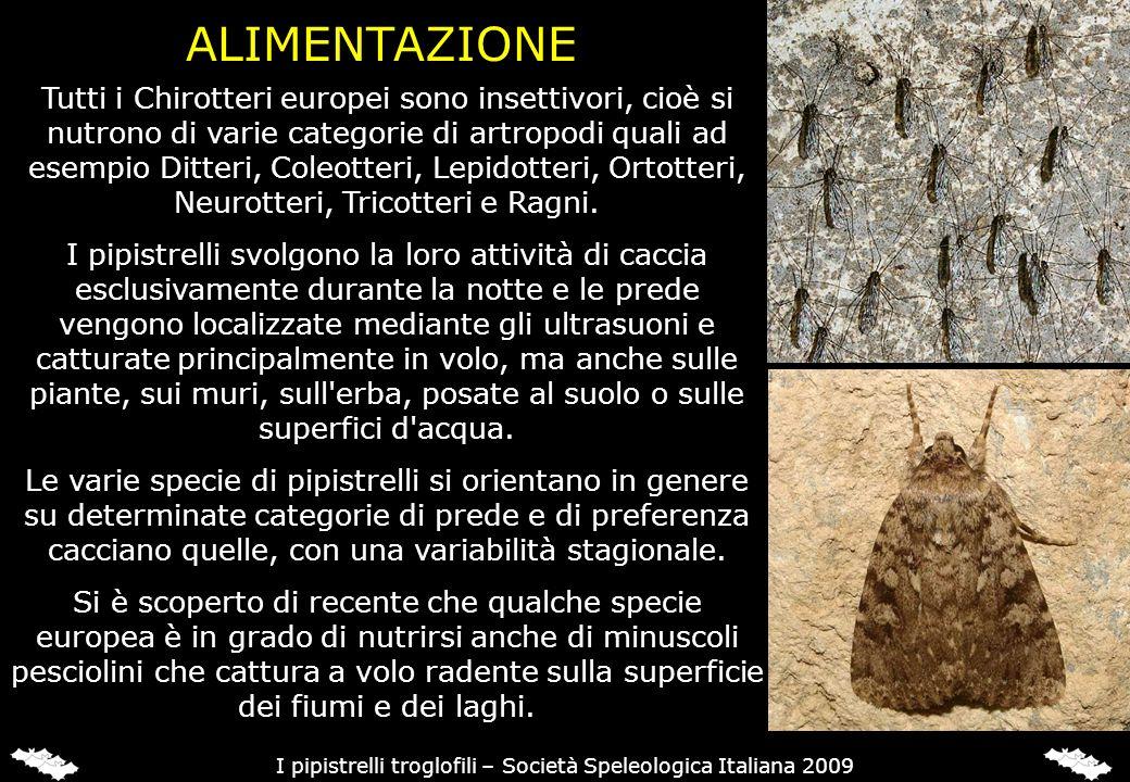 I pipistrelli troglofili – Società Speleologica Italiana 2009