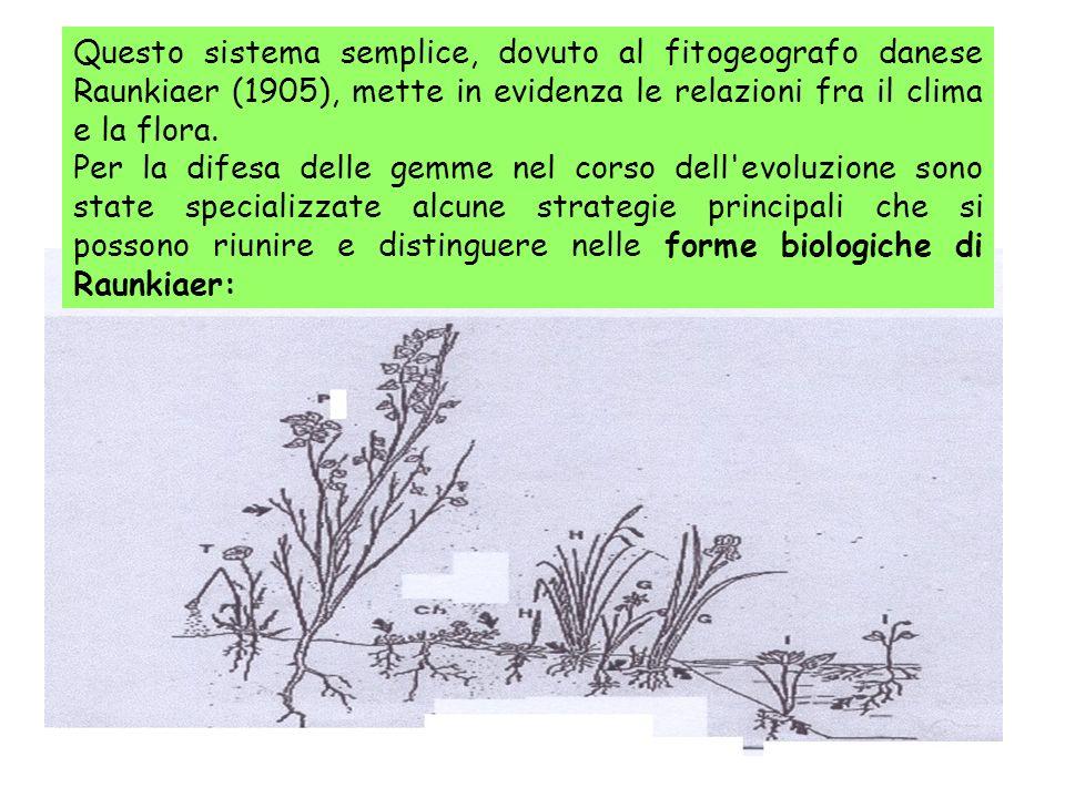 Questo sistema semplice, dovuto al fitogeografo danese Raunkiaer (1905), mette in evidenza le relazioni fra il clima e la flora.