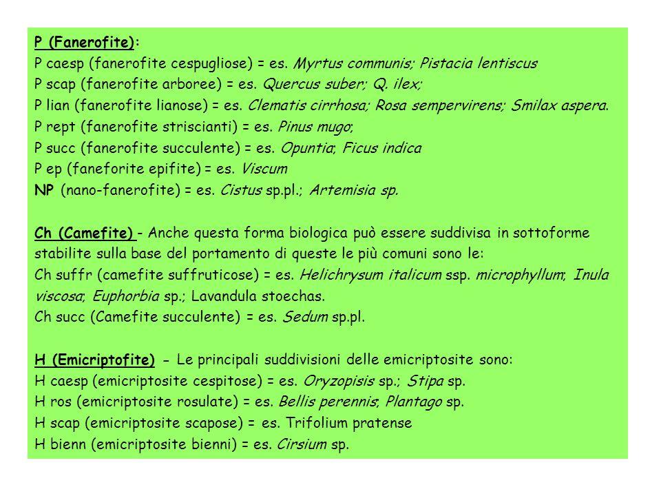 P (Fanerofite): P caesp (fanerofite cespugliose) = es. Myrtus communis; Pistacia lentiscus.