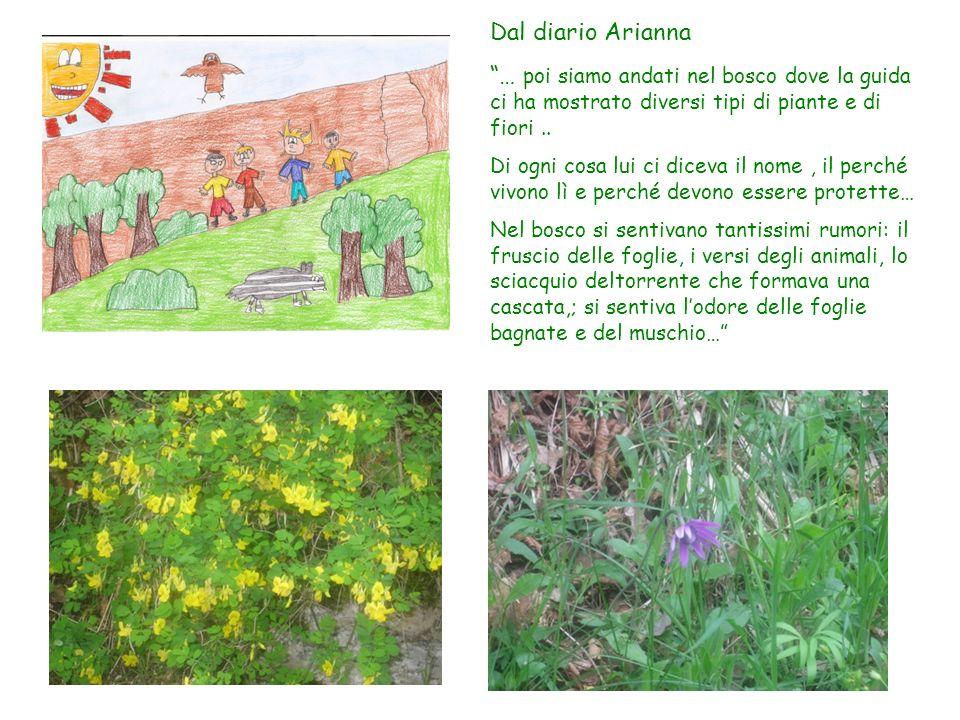 Dal diario Arianna … poi siamo andati nel bosco dove la guida ci ha mostrato diversi tipi di piante e di fiori ..