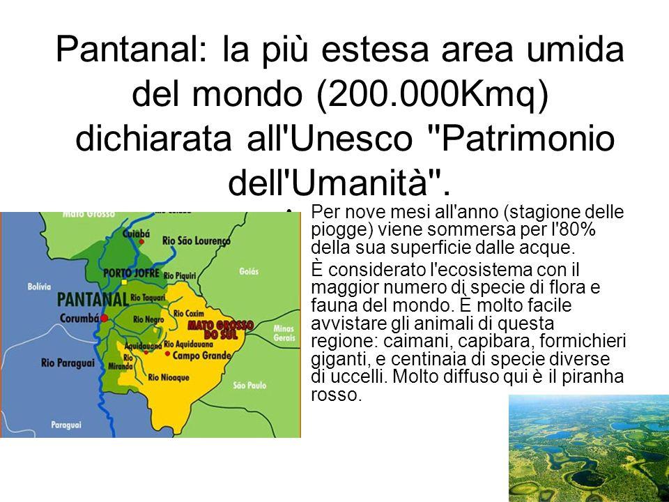 Pantanal: la più estesa area umida del mondo (200