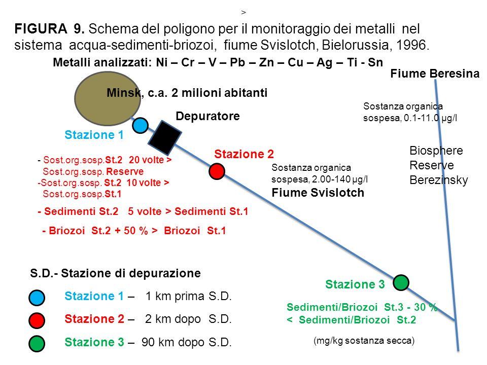 - Briozoi St.2 + 50 % > Briozoi St.1