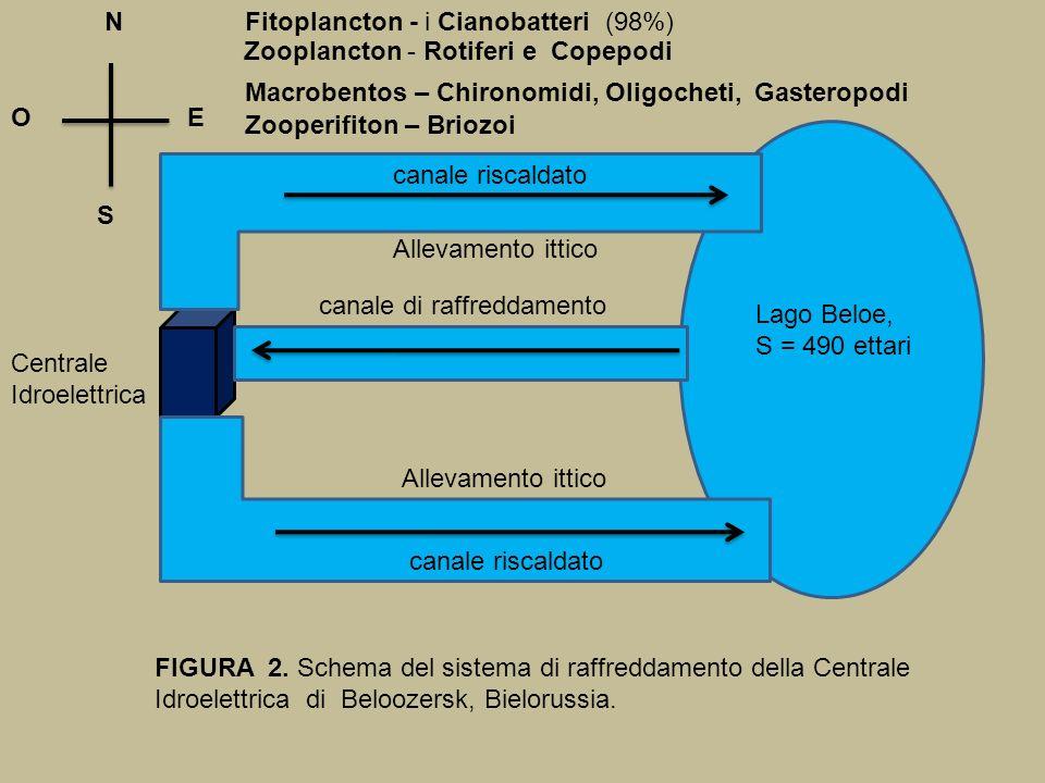 N Fitoplancton - i Cianobatteri (98%) Zooplancton - Rotiferi e Copepodi. Macrobentos – Chironomidi, Oligocheti, Gasteropodi.