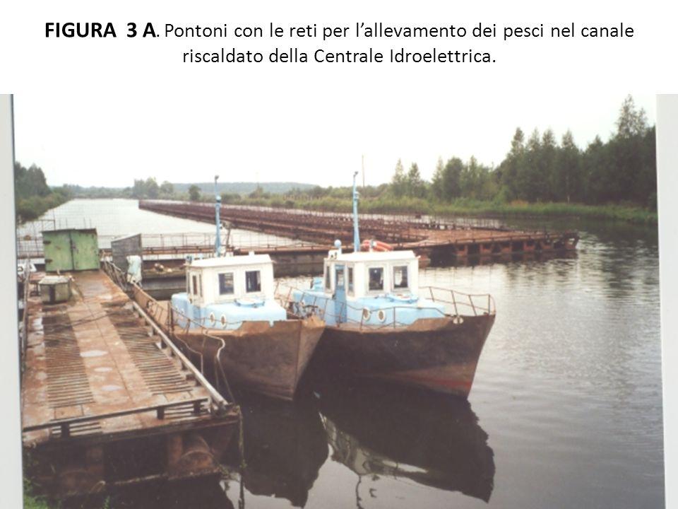 FIGURA 3 A.