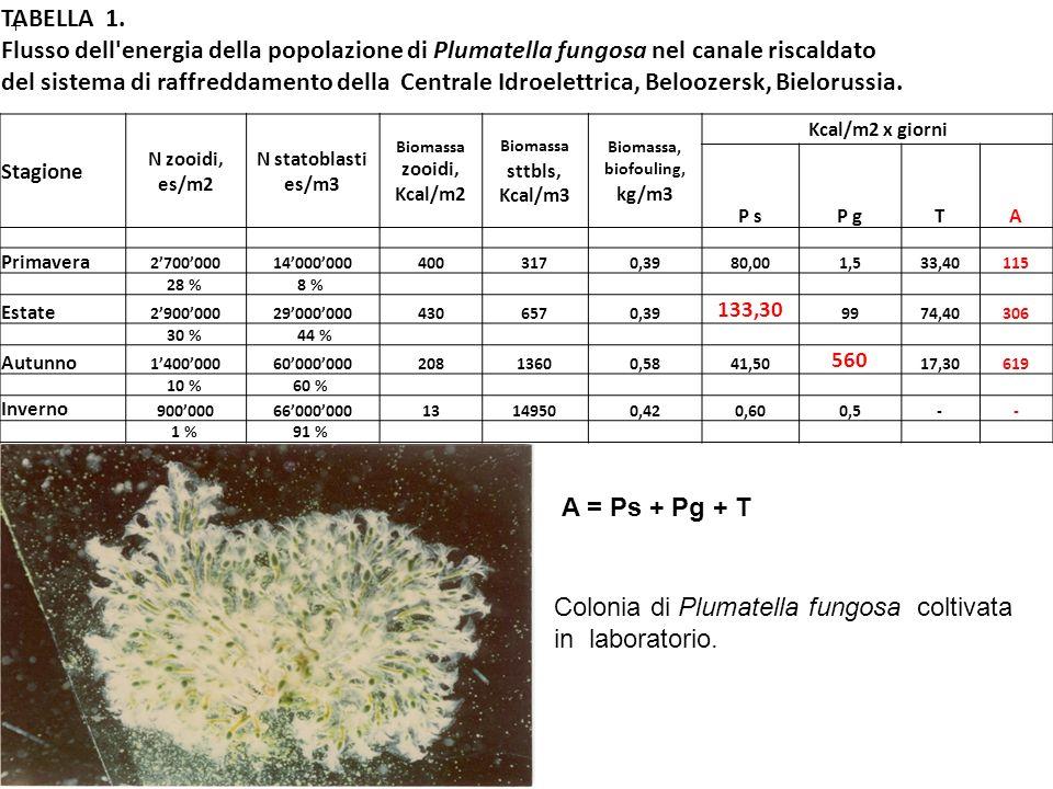 Biomassa sttbls, Kcal/m3 Biomassa, biofouling, kg/m3