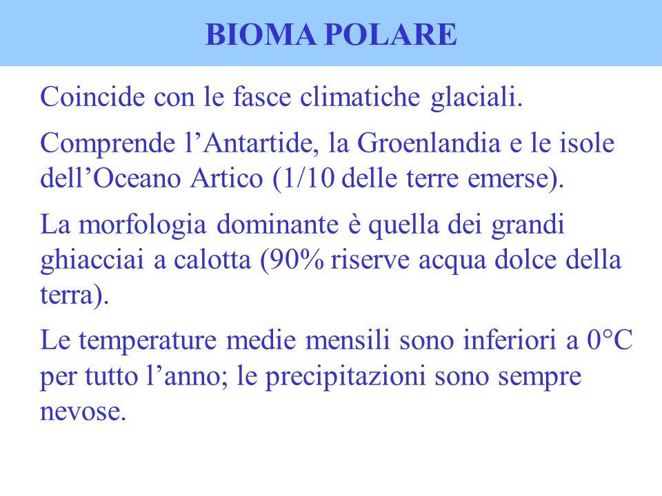 BIOMA POLARE Coincide con le fasce climatiche glaciali.