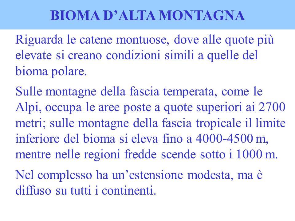 BIOMA D'ALTA MONTAGNARiguarda le catene montuose, dove alle quote più elevate si creano condizioni simili a quelle del bioma polare.