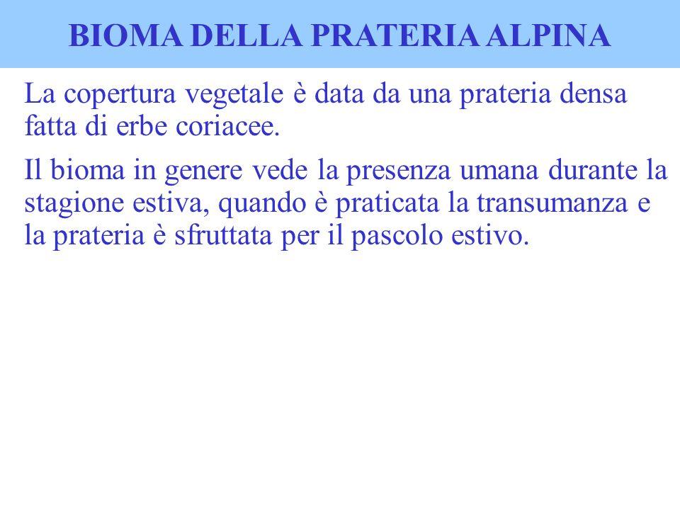 BIOMA DELLA PRATERIA ALPINA