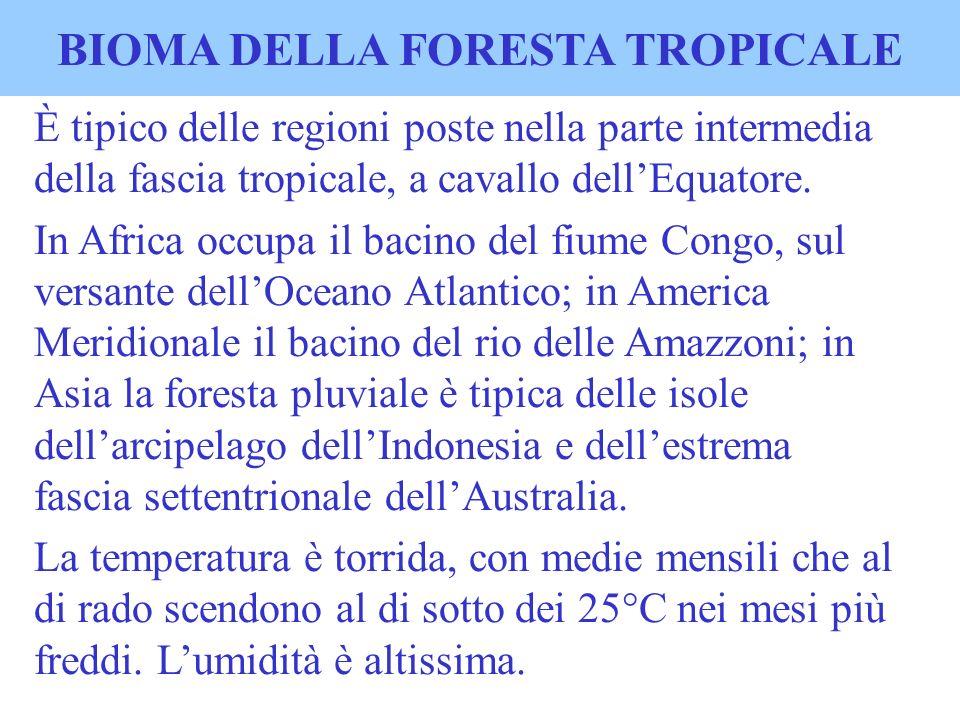 BIOMA DELLA FORESTA TROPICALE