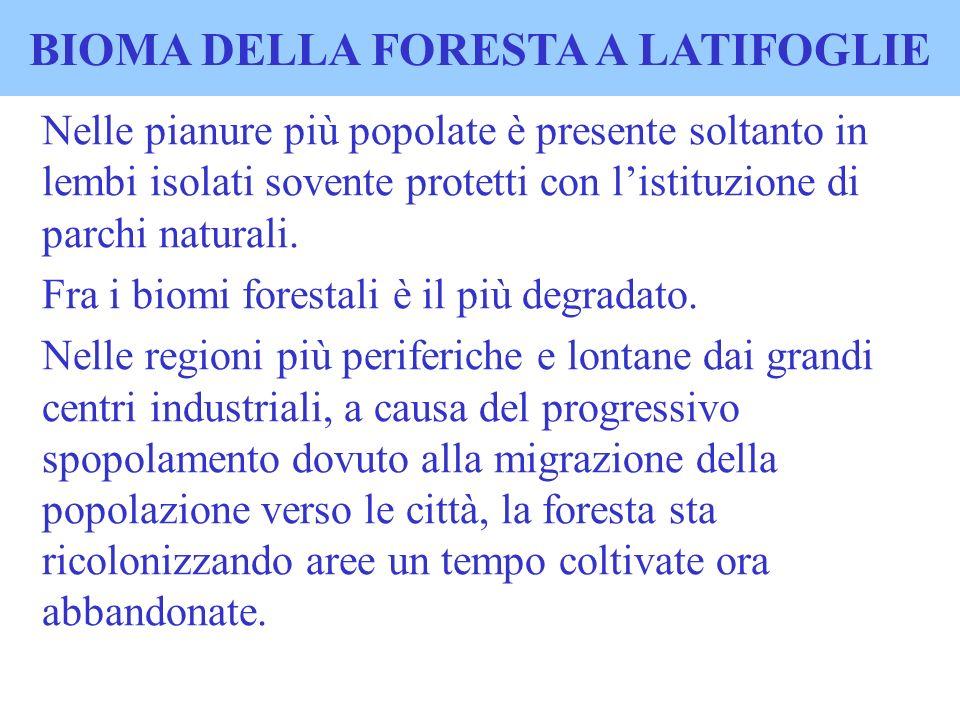 BIOMA DELLA FORESTA A LATIFOGLIE