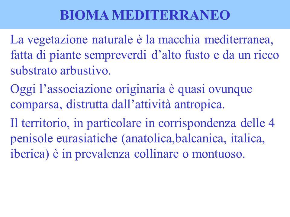 BIOMA MEDITERRANEO La vegetazione naturale è la macchia mediterranea, fatta di piante sempreverdi d'alto fusto e da un ricco substrato arbustivo.