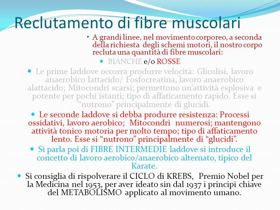 Reclutamento di fibre muscolari