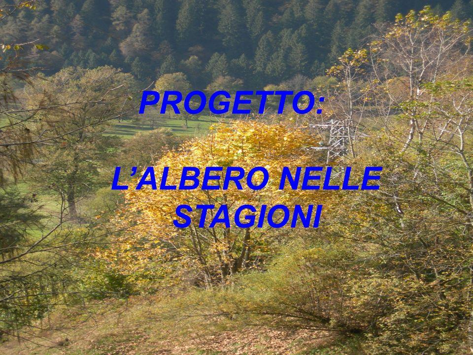 L'ALBERO NELLE STAGIONI