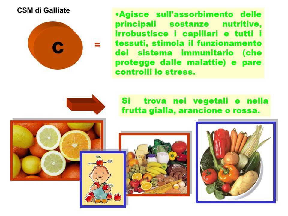 Agisce sull'assorbimento delle principali sostanze nutritive, irrobustisce i capillari e tutti i tessuti, stimola il funzionamento del sistema immunitario (che protegge dalle malattie) e pare controlli lo stress.