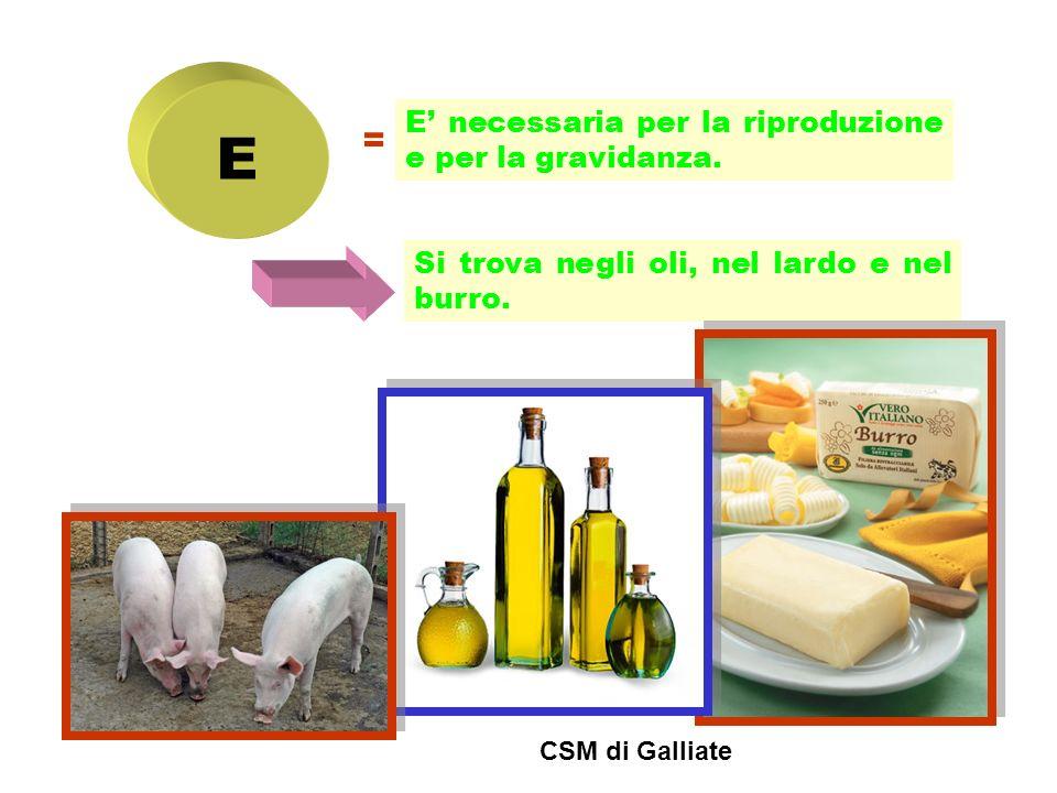 E = E' necessaria per la riproduzione e per la gravidanza.