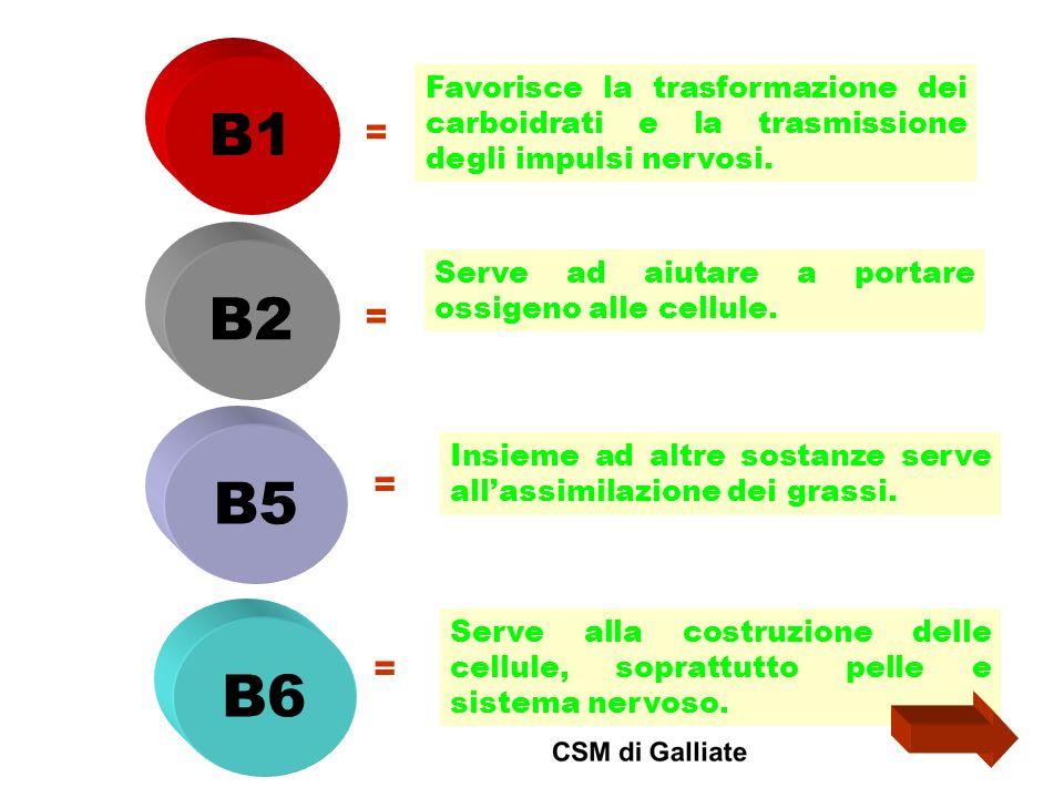 B1 Favorisce la trasformazione dei carboidrati e la trasmissione degli impulsi nervosi. = B2. Serve ad aiutare a portare ossigeno alle cellule.