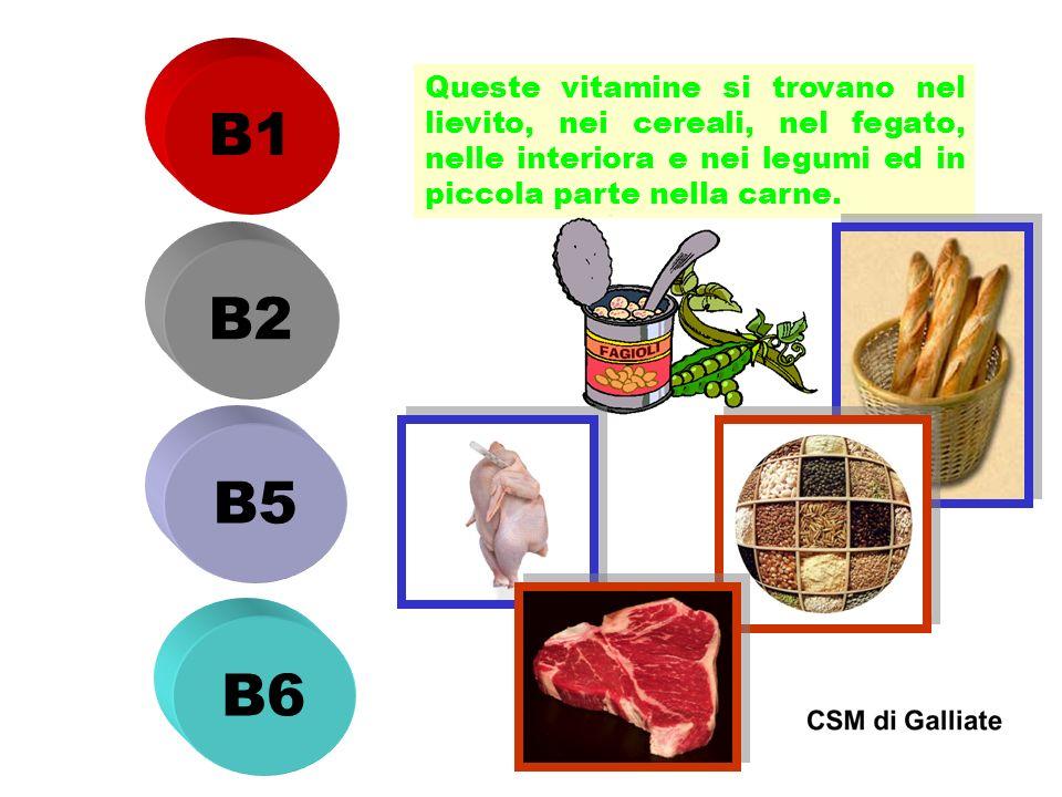 B1 Queste vitamine si trovano nel lievito, nei cereali, nel fegato, nelle interiora e nei legumi ed in piccola parte nella carne.
