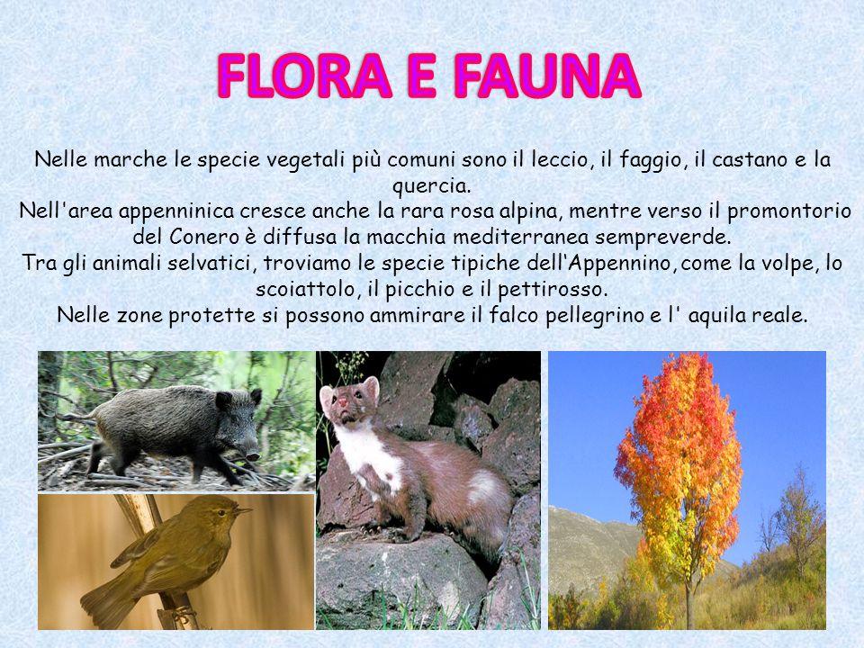 FLORA E FAUNA Nelle marche le specie vegetali più comuni sono il leccio, il faggio, il castano e la quercia.