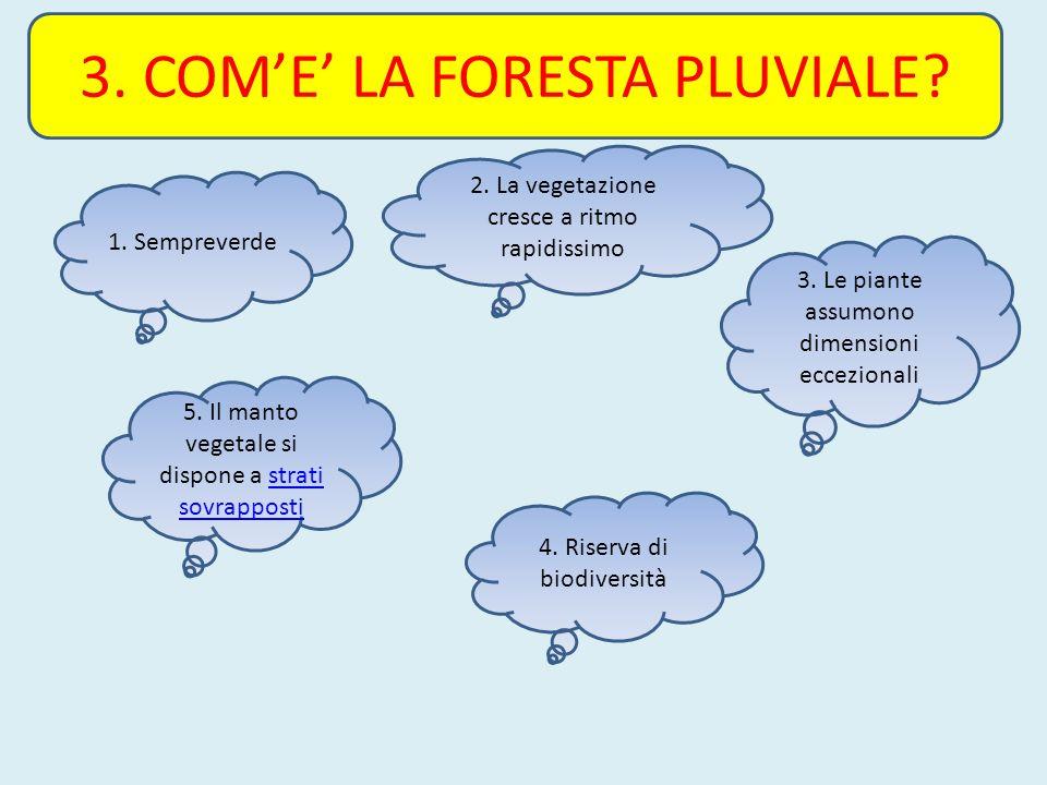 3. COM'E' LA FORESTA PLUVIALE