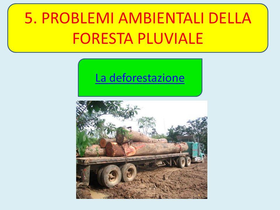 5. PROBLEMI AMBIENTALI DELLA FORESTA PLUVIALE