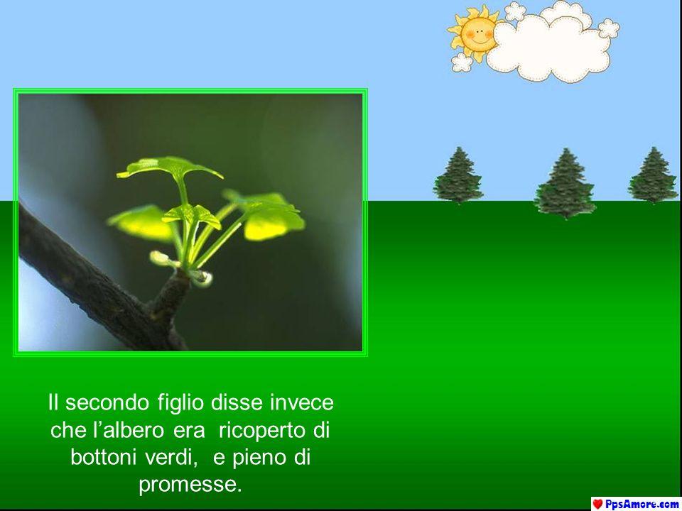 Il secondo figlio disse invece che l'albero era ricoperto di bottoni verdi, e pieno di promesse.