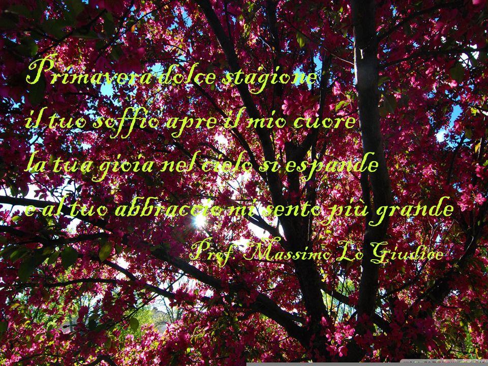 Primavera dolce stagione il tuo soffio apre il mio cuore la tua gioia nel cielo si espande e al tuo abbraccio mi sento più grande Prof.