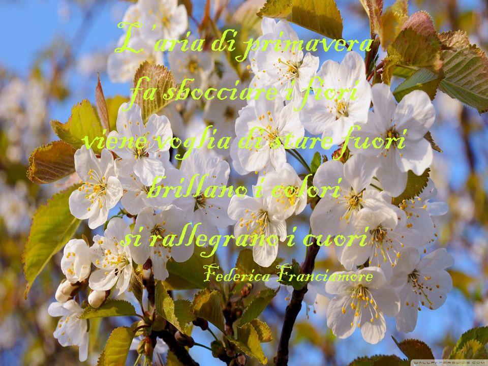 L'aria di primavera fa sbocciare i fiori viene voglia di stare fuori brillano i colori si rallegrano i cuori Federica Franciamore