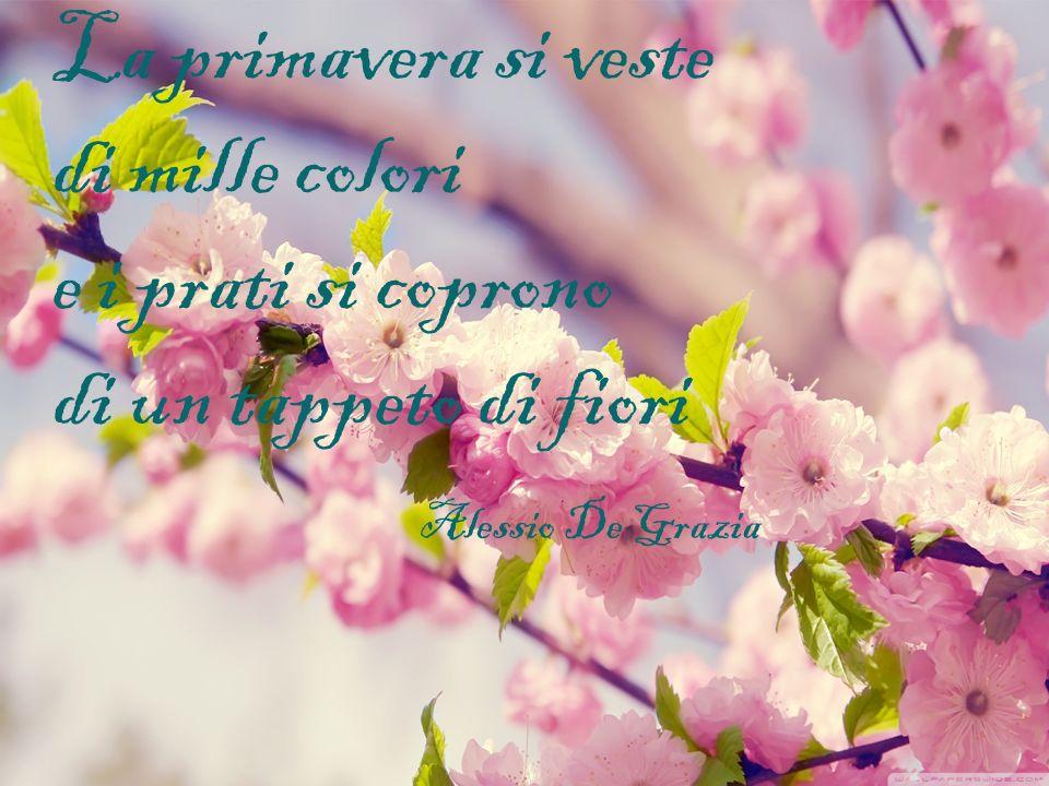 La primavera si veste di mille colori e i prati si coprono di un tappeto di fiori Alessio De Grazia