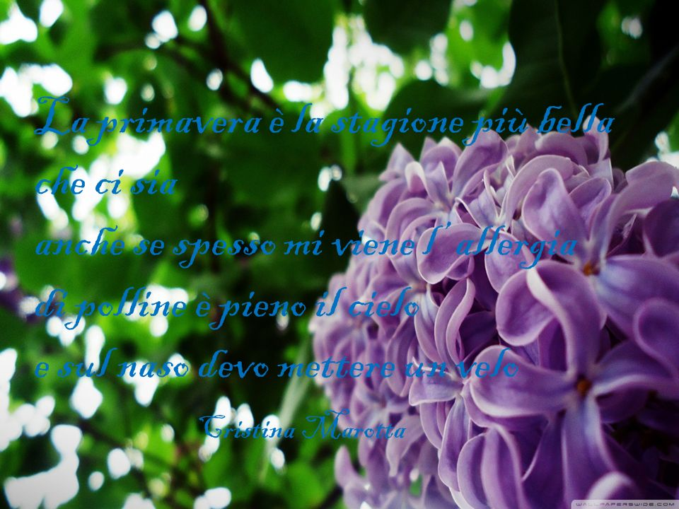 La primavera è la stagione più bella che ci sia anche se spesso mi viene l' allergia di polline è pieno il cielo e sul naso devo mettere un velo Cristina Marotta