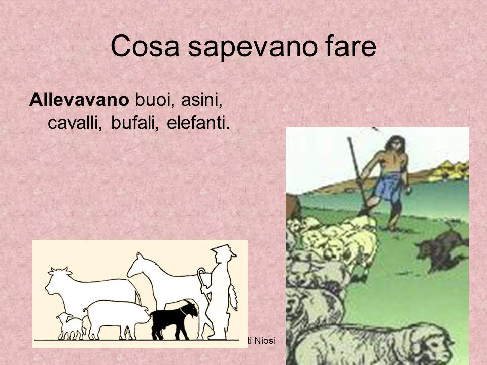 Cosa sapevano fare Allevavano buoi, asini, cavalli, bufali, elefanti.