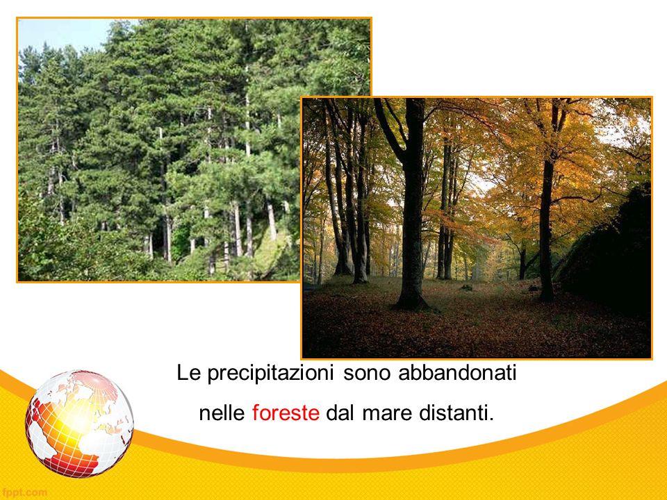 Le precipitazioni sono abbandonati nelle foreste dal mare distanti.
