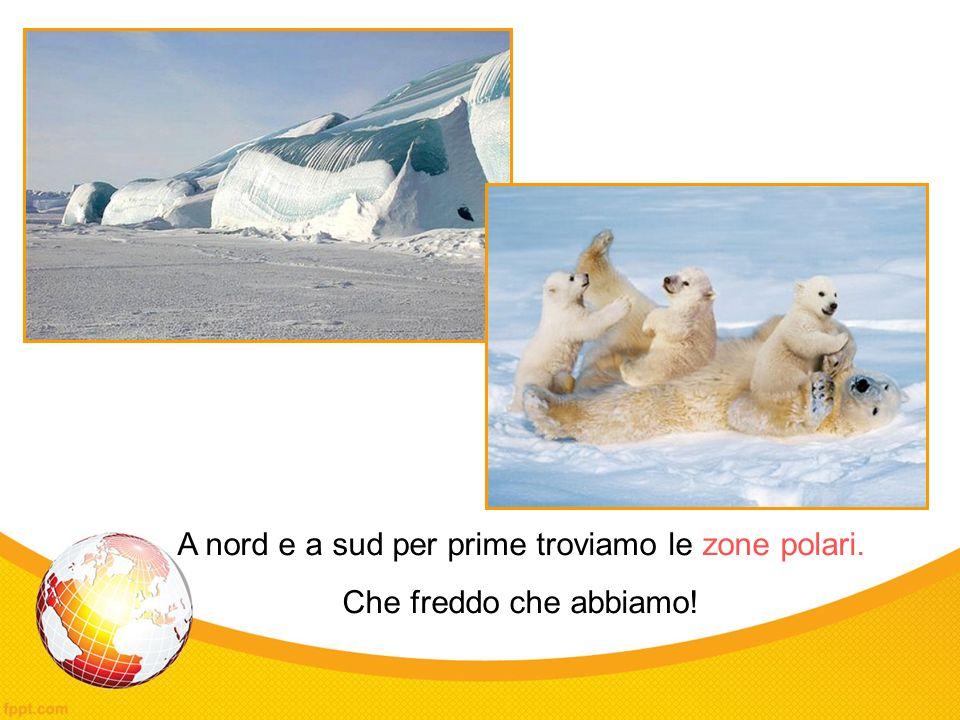 A nord e a sud per prime troviamo le zone polari.