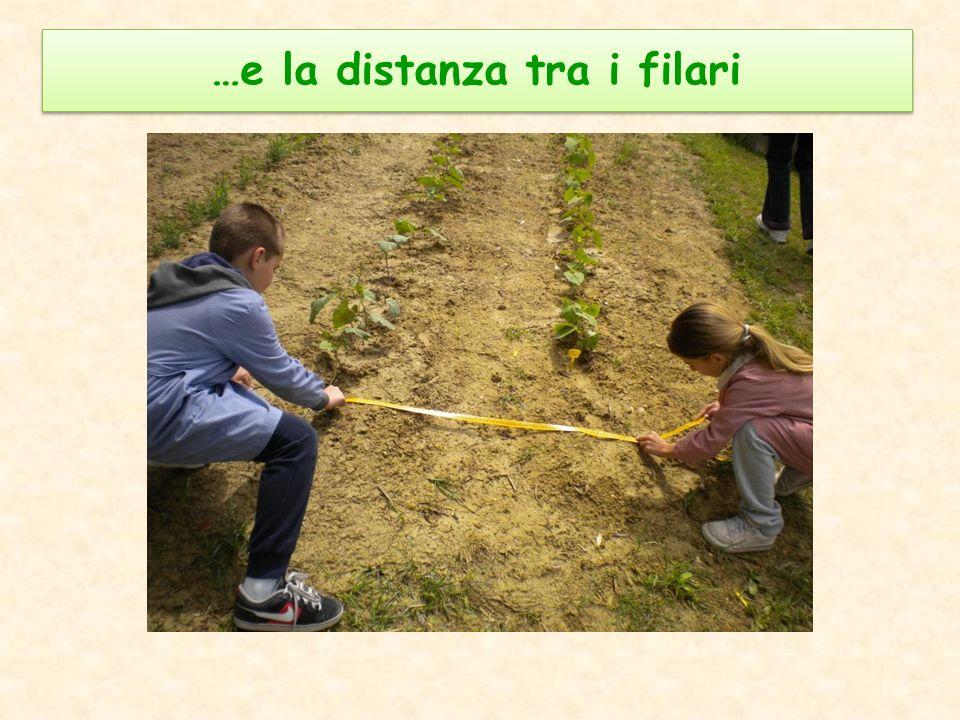…e la distanza tra i filari