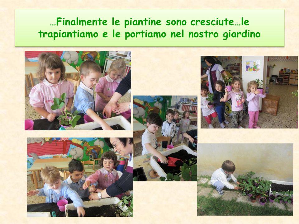 …Finalmente le piantine sono cresciute…le trapiantiamo e le portiamo nel nostro giardino